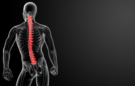 3d render Human Spine Anatomy - back view photo