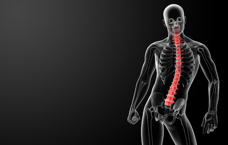 3d render Human Spine Anatomy - front view photo