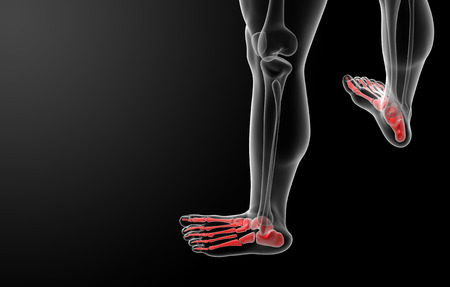 3d render x-ray of foot - top view photo