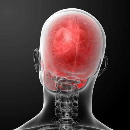 ethmoid: 3d render human skull anatomy - top view Stock Photo