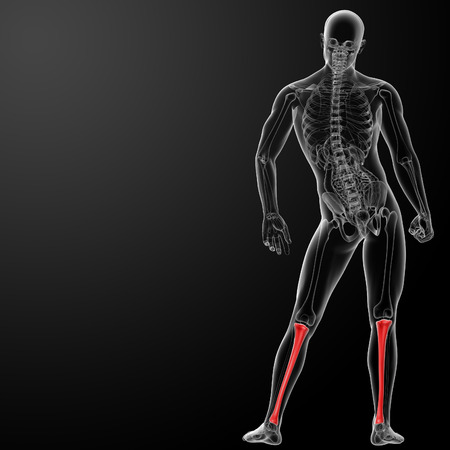tibia: 3d render human tibia - back view