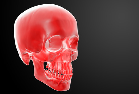 3d render red skull on black background - side view photo