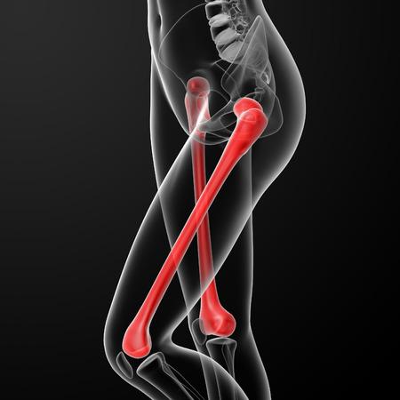 3d rendered illustration of the female femur bone - side view