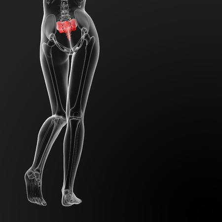 sacrum: 3d render illustration of the female sacrum bone - back view Stock Photo