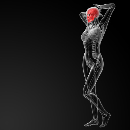 ethmoid: 3d rendered illustration of the female skull bone - side view