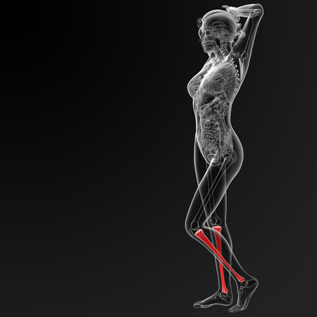 tibia: 3d render illustration of the female tibia bone - side view