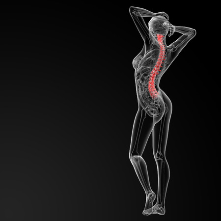 spinal disks: 3d rendered illustration of the female Vertebral column - back view Stock Photo