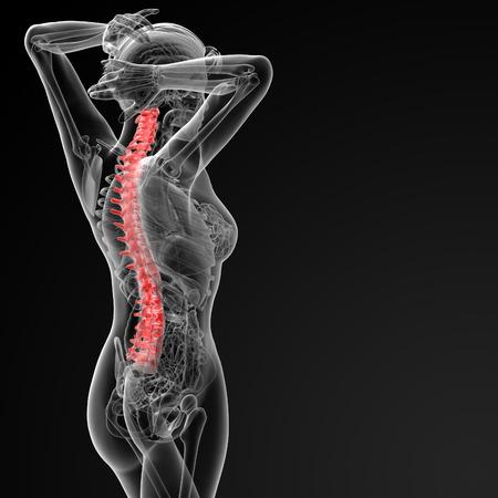 spinal disks: 3d rendered illustration of the female Vertebral column - side view