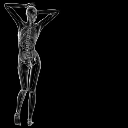 3d rendered illustration of the female anatomy - back view Stock Photo
