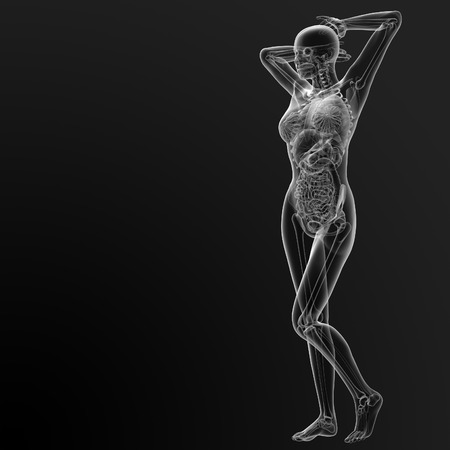 3d render illustration of the female anatomy - side view Stock Photo