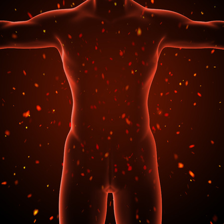 3d render illustration of the human body illustration