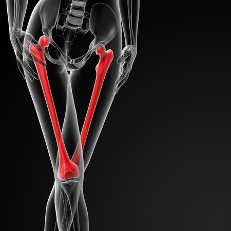 3d rendered illustration of the female femur bone - front view Stock Photo