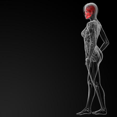 3d rendered illustration of the female skull bone - side view