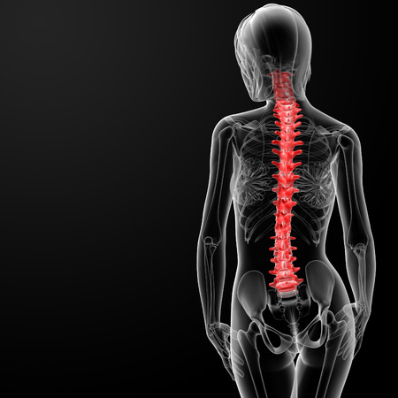 3d rendered illustration of the female spine bone - back view