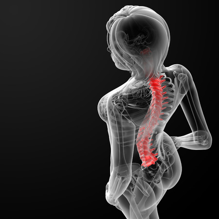 coccyx pain: 3d rendered illustration of the female spine bone - top view Stock Photo