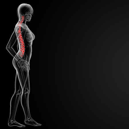 coccyx pain: 3d rendered illustration of the female spine bone - side view