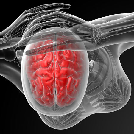 megrim: 3d rendered illustration of the female brain - top view