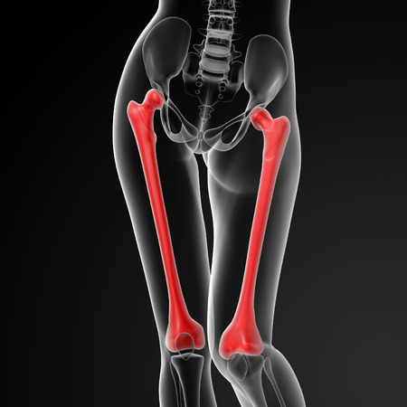 3d rendered illustration of the female femur bone - front view Stock Photo