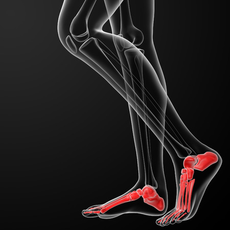 3d rendered illustration of the female foot bone - side view illustration
