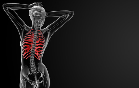 ribcage: 3d rendered illustration of the female ribcage bone - back view