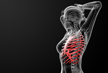 ribcage: 3d rendered illustration of the female ribcage bone - side view