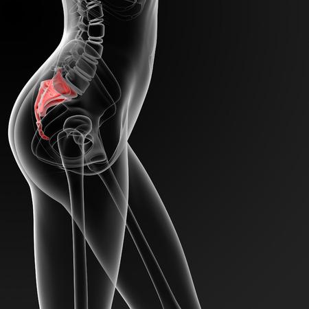 3d render medical illustration of the female sacrum bone - side view