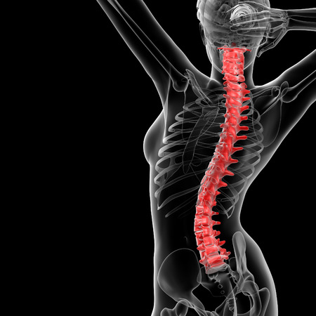 coccyx pain: 3d rendered illustration of the female Vertebral column - back view Stock Photo