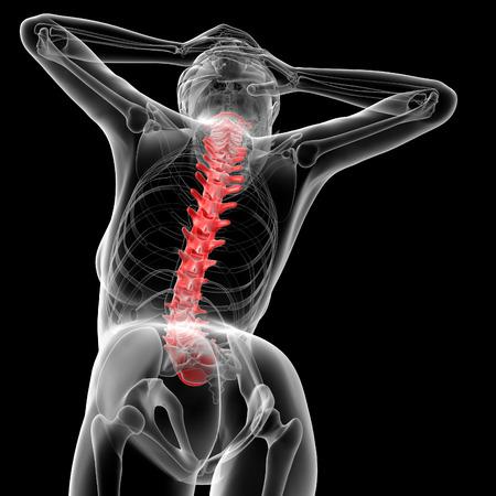 vertebral column: 3d rendered illustration of the female Vertebral column - bottom view
