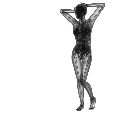 3d renderfemale human anatomy - dront view photo