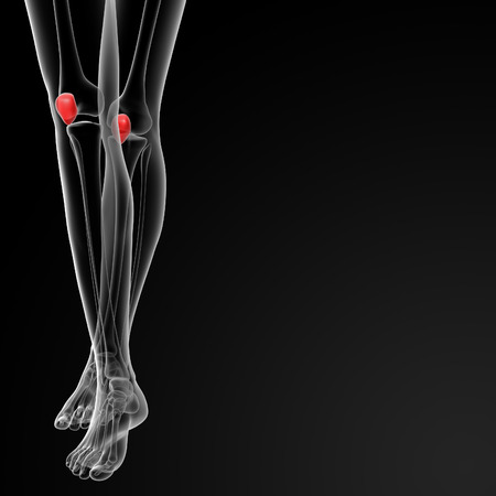 3d rendered illustration of the female patella bone - front view Stock Photo