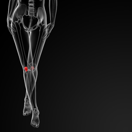 patella: 3d rendered illustration of the female patella bone - front view Stock Photo