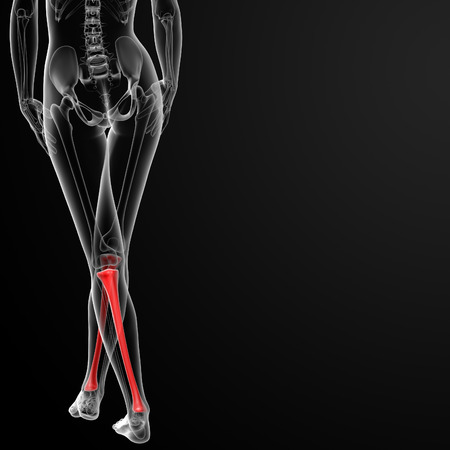 tibia: 3d rendered illustration of the female tibia bone - back view