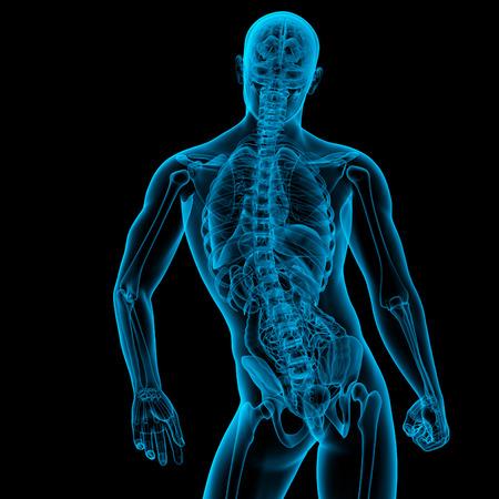 3d render medical illustration of the male anatomy - back view illustration