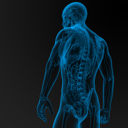 3d render illustration of the male anatomy back view