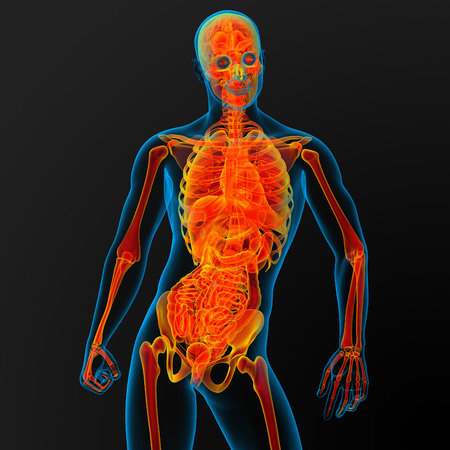 3d render illustration of the mal anatomy - front view illustration