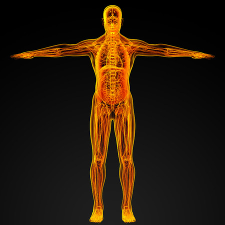 3d render illustration of the male muscle - front view illustration