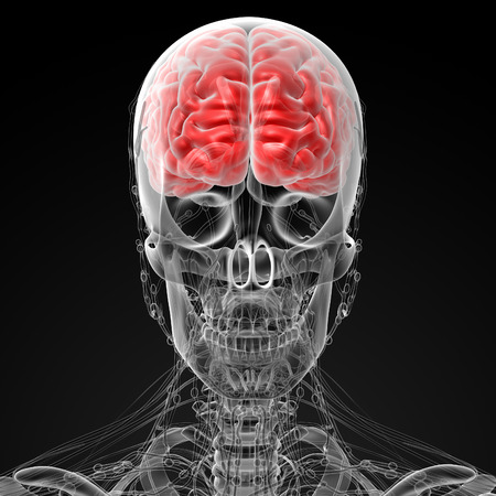 3d rendered illustration of the male brain illustration