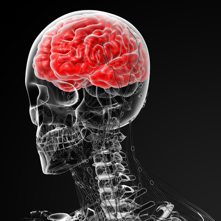 3d rendered illustration of the male brain -side view Stock Illustration - 29868377