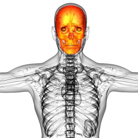 ethmoid: 3d render medical illustration of the skull bone - front view Stock Photo