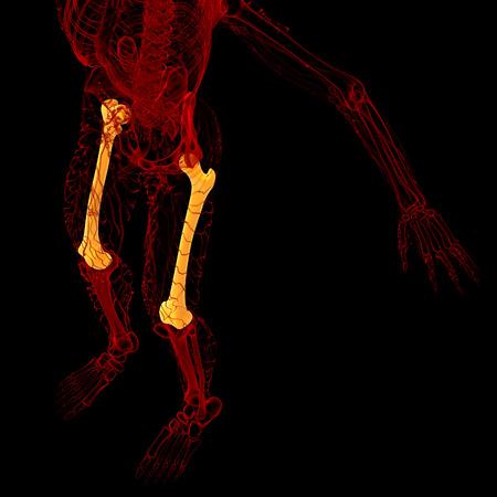 femur: 3d render medical illustration of the femur bone - top view