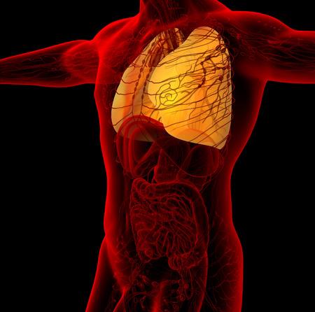 corpo umano: 3d rendere l'illustrazione medico del polmone umano - vista laterale Archivio Fotografico