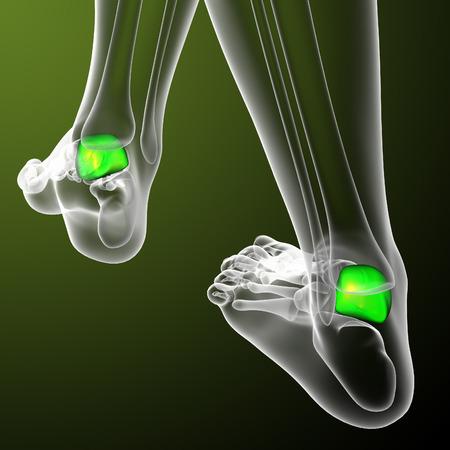tarsus: 3D rendering illustrazione medica dell'osso talus - Vista di dietro Archivio Fotografico