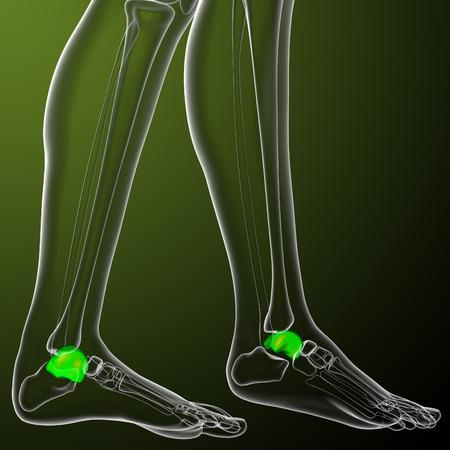 tarsus: 3D rendering illustrazione medica dell'osso talus - vista laterale