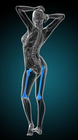 femur: 3d render medical illustration of the femur bone - back view