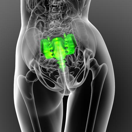 sacral spine: 3d render medical illustration of the sacrum bone - back view