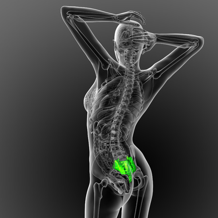 coccyx: 3d render medical illustration of the sacrum bone - back view
