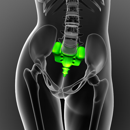 coccyx: 3d render medical illustration of the sacrum bone - front view