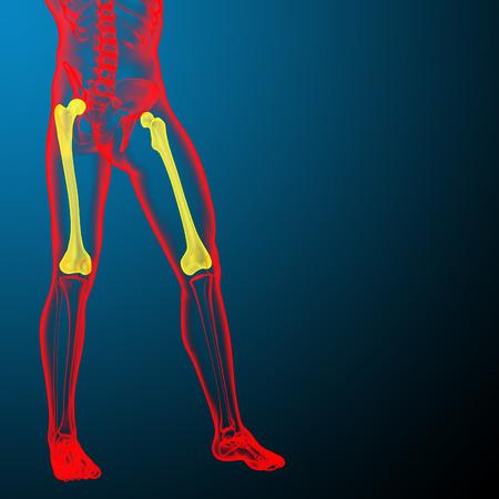 femur: 3d render medical illustration of the femur bone - front view