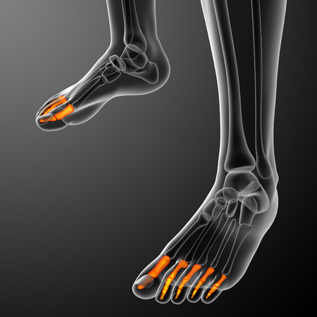 phalanx: 3d render illustration of the human phalanges foot - front view