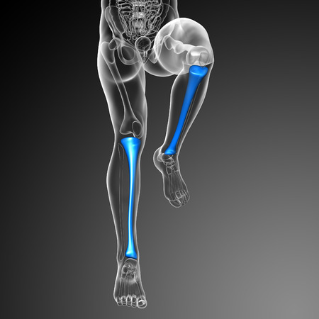 tibia: 3d render medical illustration of the tibia bone - front view